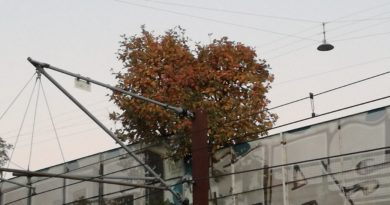Issanda puud saavad toidust küllalt – Psalm 104:16